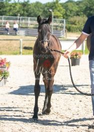 Foal 07 HDP régional 2020-159823