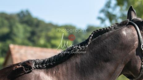 Foal 07 HDP régional 2020-159826