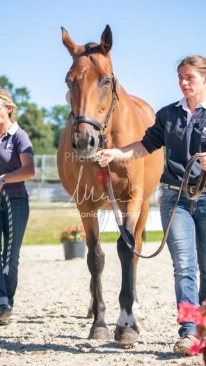 Foal 08 HDP régional 2020-089631