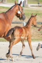 Foal 08 HDP régional 2020-089632