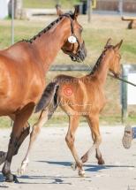 Foal 08 HDP régional 2020-089633