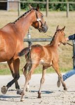 Foal 08 HDP régional 2020-089634