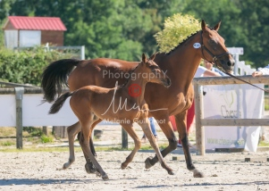 Foal 08 HDP régional 2020-089643