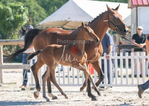 Foal 08 HDP régional 2020-089644