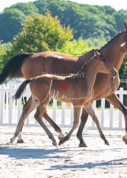 Foal 08 HDP régional 2020-089648