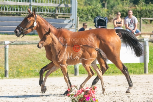 Foal 08 HDP régional 2020-089650