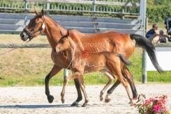 Foal 08 HDP régional 2020-089651