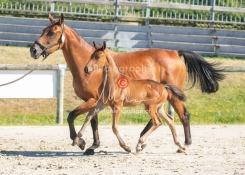 Foal 08 HDP régional 2020-089652