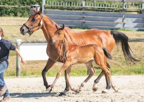 Foal 08 HDP régional 2020-089653