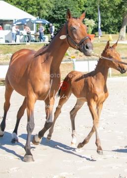 Foal 08 HDP régional 2020-089658
