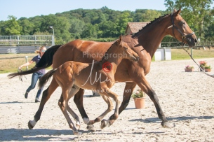Foal 08 HDP régional 2020-089664