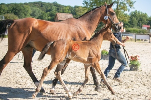 Foal 08 HDP régional 2020-089669