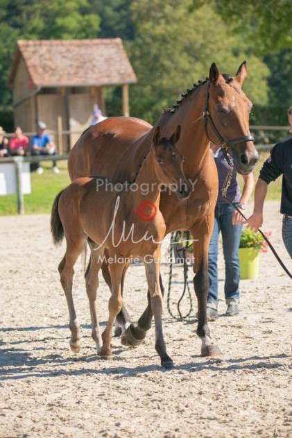 Foal 08 HDP régional 2020-089670