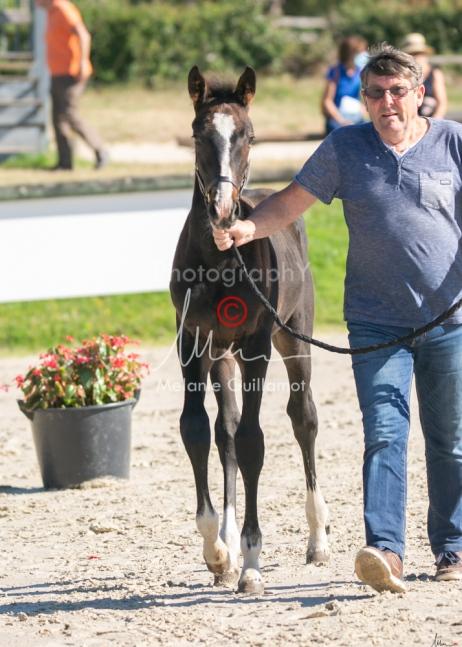 Foal 09 HDP régional 2020-039327