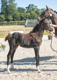 Foal 09 HDP régional 2020-099333