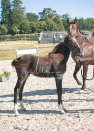 Foal 09 HDP régional 2020-099335