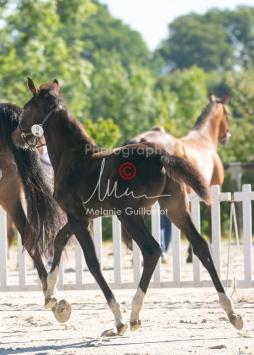 Foal 09 HDP régional 2020-099344
