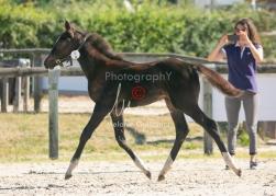 Foal 09 HDP régional 2020-099347