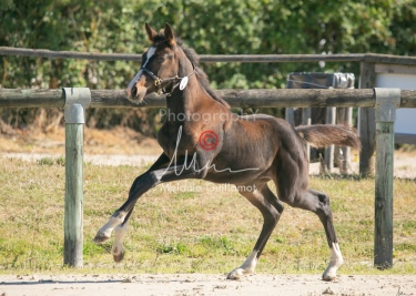Foal 09 HDP régional 2020-099355