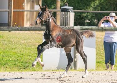 Foal 09 HDP régional 2020-099358