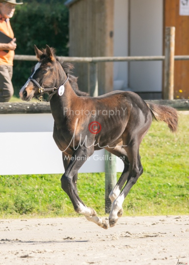 Foal 09 HDP régional 2020-099359