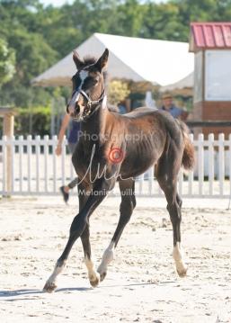 Foal 09 HDP régional 2020-099366