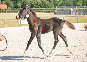 Foal 09 HDP régional 2020-099371