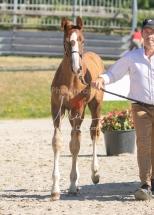 Foal 10 HDP régional 2020-089681