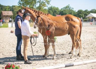 Foal 10 HDP régional 2020-109689
