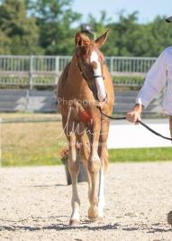 Foal 10 HDP régional 2020-109695