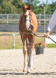 Foal 10 HDP régional 2020-109696