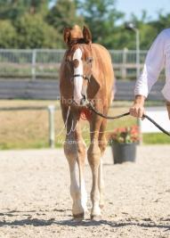 Foal 10 HDP régional 2020-109697