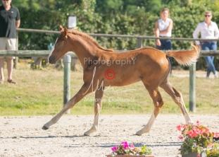 Foal 10 HDP régional 2020-109705