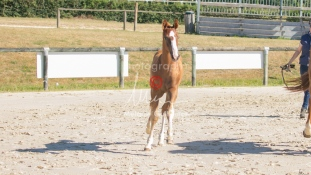 Foal 10 HDP régional 2020-109712