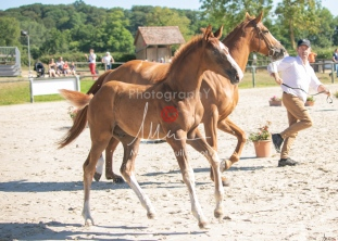 Foal 10 HDP régional 2020-109714
