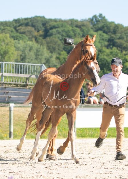 Foal 10 HDP régional 2020-109717