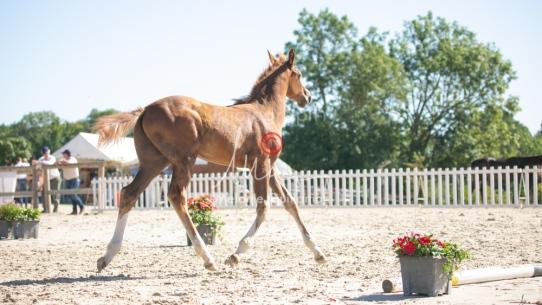 Foal 10 HDP régional 2020-109722