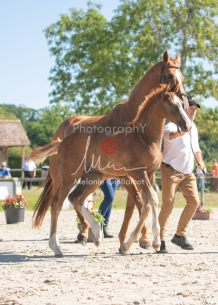 Foal 10 HDP régional 2020-109726