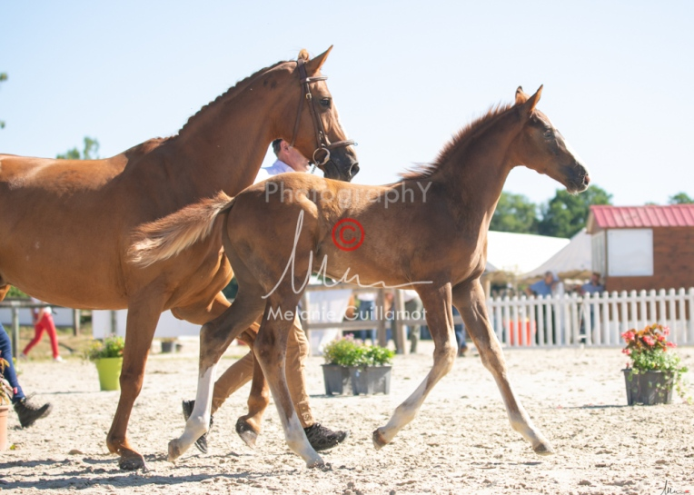 Foal 10 HDP régional 2020-109728