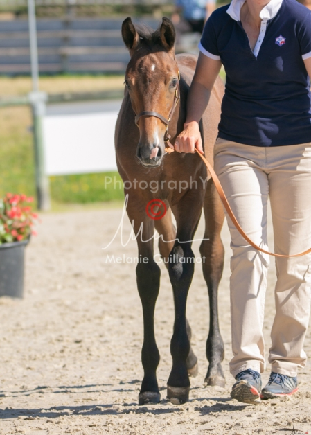 Foal 12 HDP régional 2020-069541
