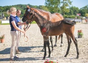 Foal 12 HDP régional 2020-129546