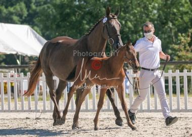 Foal 13 HDP régional 2020-130064