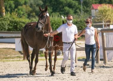 Foal 13 HDP régional 2020-140032