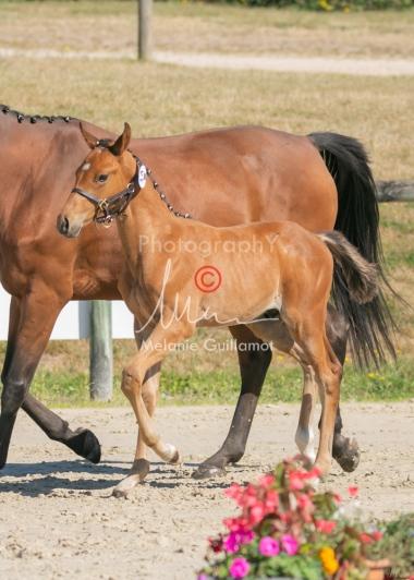 Foal 14 HDP régional 2020-140010