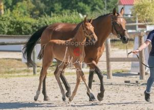 Foal 14 HDP régional 2020-140023