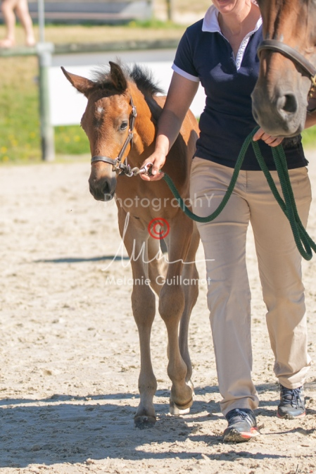 Foal 15 HDP régional 2020-109740