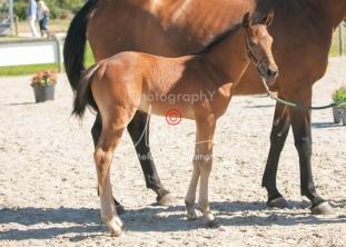 Foal 15 HDP régional 2020-159742
