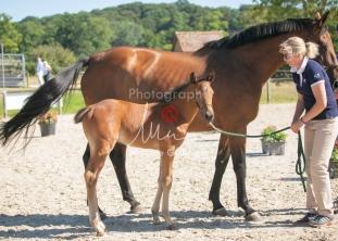 Foal 15 HDP régional 2020-159743