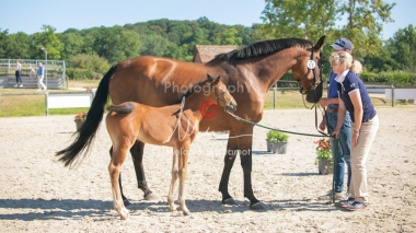Foal 15 HDP régional 2020-159750