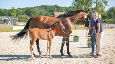 Foal 15 HDP régional 2020-159751